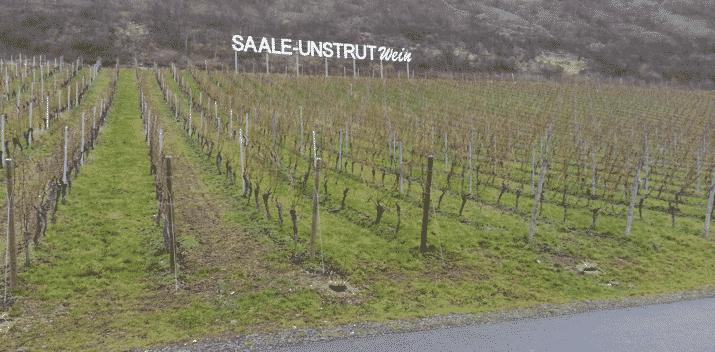 Saale Unstrut Wein